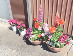 事務所前の花.jpg